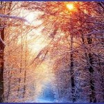 snow-scene-forest-collage