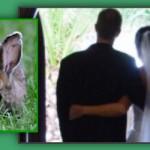 Revisiting the Rabbits