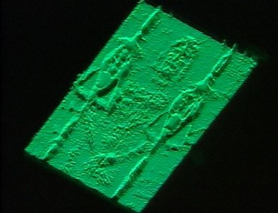 The frontal image of the Shroud by a VP-8 Image Analyzer.